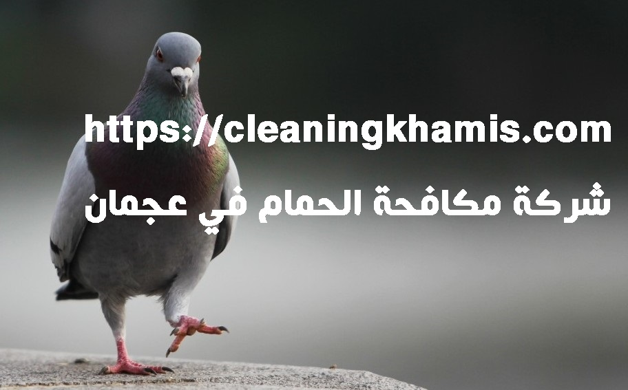 شركة مكافحة الحمام في عجمان