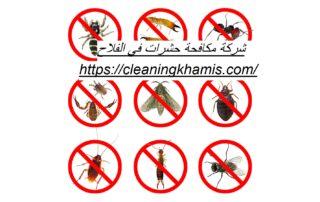 شركة مكافحة حشرات في الفلاح